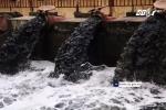 Hà Nội: Dân xã Lam Điền buộc phải dùng nước ô nhiễm đen ngòm tưới rau