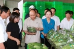 Thủ tướng thăm Dự án đầu tư Nông nghiệp ứng dụng công nghệ cao VinEco- Hải Phòng