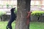 Choáng với khả năng né tránh nhanh như điện của sóc khi bị truy đuổi