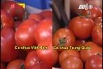 Phân biệt cà chua Việt Nam và Trung Quốc