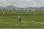 Dặm lúa ngoài đồng, người phụ nữ bị sét đánh chết