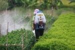 Gần 50% người xét nghiệm tại Hà Nội nhiễm thuốc trừ sâu trong máu