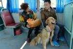 Chó dẫn đường cho xe bệnh viện vào cứu chủ