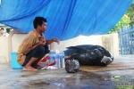 'Cá ông' nặng gần 7 tạ dạt vào vùng biển Bình Định