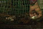 Video: Đi đặt dớn cá lúc 3h sáng, người An Giang kiếm tiền triệu mỗi ngày