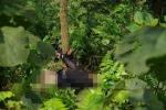 Thi thể phụ nữ bị trói hai tay vào gốc cây, váy lật ngược: Bắt khẩn cấp nghi phạm