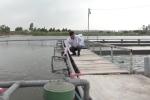 Video: Nông dân Hải Dương tạo 'sông nhân tạo' nuôi 'cá thể thao' kiếm tiền tỷ