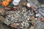 Sau mưa bão, dân Hà Nội lội sông Kim Ngưu kéo được cả tạ cá