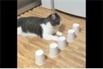 Há hốc mồm với tài tìm đồ vật của chú mèo thông minh