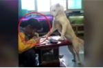 Ông bố Trung Quốc huấn luyện chó đứng canh con gái học bài