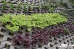 Video, ảnh: Độc đáo vườn rau xanh trong hốc bê tông giữa Thủ đô