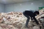 Đà Nẵng: Cận cảnh 15 tấn thịt hôi thối sắp lên bàn nhậu