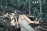 Khởi tố vụ án phá rừng phòng hộ quy mô lớn ở Bình Định