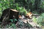 Kỷ luật nhiều cán bộ bảo vệ rừng ở Gia Lai