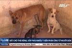 Bắt chó thả rông: Nhiều lợi ích nhưng người dân vẫn phản ứng kịch liệt