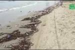 Video: Hãi hùng bãi biển Đà Nẵng ngập ngụa rác ngày nghỉ lễ