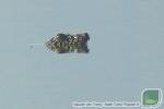 Rùa quý hiếm nhất thế giới nổi ở hồ Đồng Mô