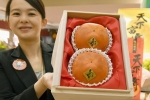 Cận cảnh quả hồng Nhật giá 50 triệu đồng, được tuyển lựa... kỹ hơn hoa hậu