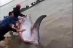 Clip: Giải cứu cá voi 3 tấn mắc cạn ở Nam Định