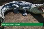 Mexico: Uống máu cá sấu để chữa ung thư, HIV