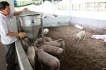 Nghiên cứu ứng dụng công nghệ đệm lót sinh học trong chăn nuôi lợn nông hộ