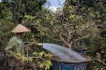 Chăm sóc cây cảnh sau Tết hốt bạc ở Đắk Lắk