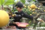 Ảnh: Nông dân Hưng Yên trồng chanh vàng phú quý bằng đậu nành hút khách dịp Tết