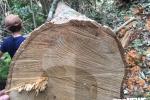 Phá rừng phòng hộ ở Huế: Điều chuyển 7 cán bộ bảo vệ rừng