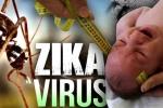 Bệnh nhân nhiễm virus Zika tăng nhanh, khuyến cáo tình dục an toàn