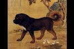 Loài chó mang ý nghĩa gì trong quan niệm dân gian Trung Quốc?