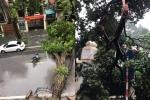 Hà Nội mưa to gió giật, nhiều tuyến phố ngập sâu, cây xanh đổ gãy la liệt