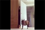 Clip hài hước về chú chó cuống cuồng đi tìm chủ
