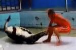 Cá sấu nổi điên ngoạm tay huấn luyện viên, tung đòn xoắn răng chết chóc