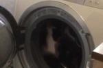 Hài hước video mèo bắt chước chuột, lao vào máy giặt tập thể dục giảm cân