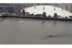 Xem video quái vật khổng lồ nổi lên mặt nước ở sông Thames