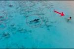 Rợn người clip 4 con cá mập lặng lẽ áp sát bé trai đang mải mê tắm biển