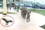 Clip: Ngỗng hung hãn tấn công khiến lính Mỹ sợ hãi