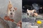 Hành động của chó mẹ khi được người lạ cho đồ ăn khiến triệu người rơi lệ