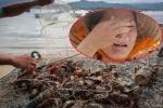 Bão số 12 tàn phá 'thủ phủ' tôm hùm Phú Yên: 'Tôi chỉ muốn bị cuốn theo tôm để đời bớt khổ'