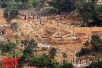 Bán đảo Sơn Trà bị 'xẻ thịt': Vì sao cho chặt cây để tận thu củi?