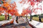 Video: Con đường phong lá đỏ đẹp như mơ ở Hà Nội