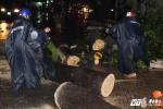 Sài Gòn mưa lớn liên tiếp, gió lốc quật ngã cổ thụ, đè bẹp ôtô
