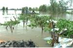 Vỡ đê, 148 ha lúa ở Đồng Tháp chìm trong nước lũ