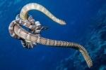 Ác chiến giữa rắn biển và lươn điện