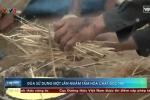 Clip: Rùng mình cảnh sản xuất đũa dùng một lần tẩm hóa chất, bột lạ ở Nghệ An