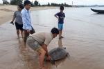 Ngư dân Hà Tĩnh thả rùa 'khủng' về biển