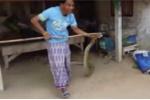 Ly kỳ người dùng cán chổi bắt rắn khổng lồ đe dọa dân làng suốt 20 năm