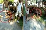 Chó nhỏ sủa loạn làm chúa sơn lâm sợ khiếp vía