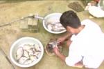 Ăn gỏi cá sống, nhiều người Yên Bái mắc sán lá nhỏ
