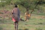 Video: 3 dị nhân khiến đàn sư tử kinh hồn bạt vía dù chưa động thủ